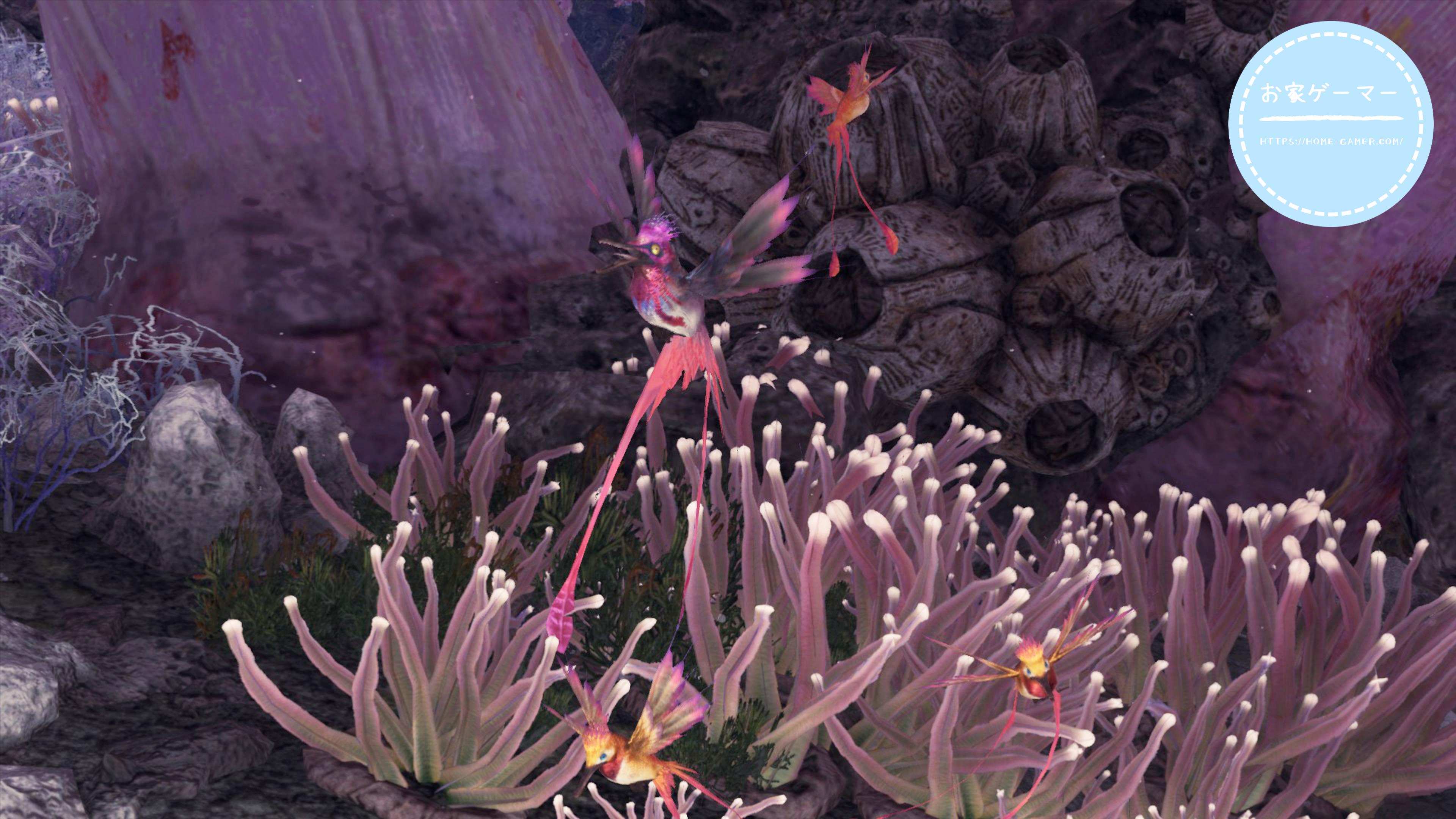 ドリ タキシード サンゴ
